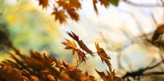 dieta jesienna